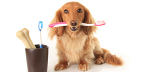 dog teeth cleaning Cave Creek